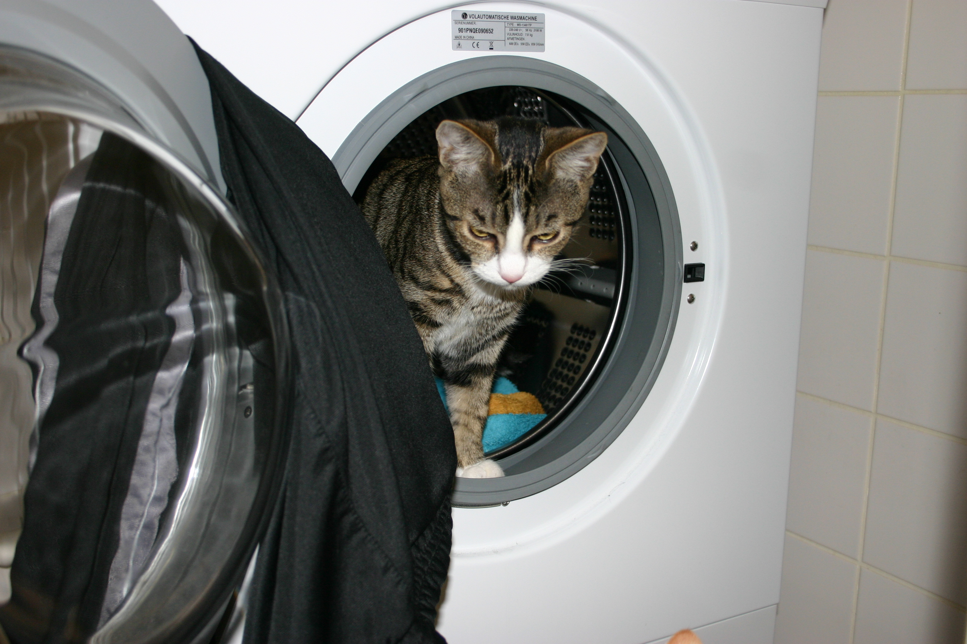 foto: Kat in wasmachine