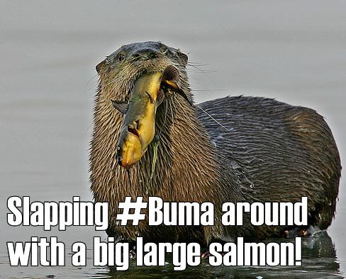 buma-salmon