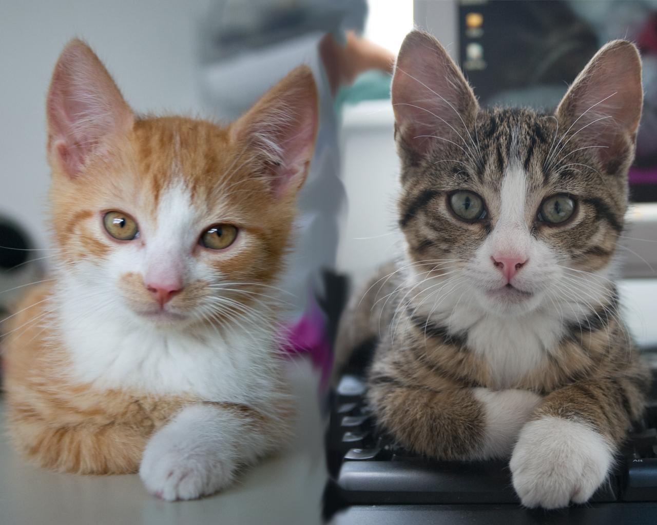 Donder & Bliksem: Miauw!