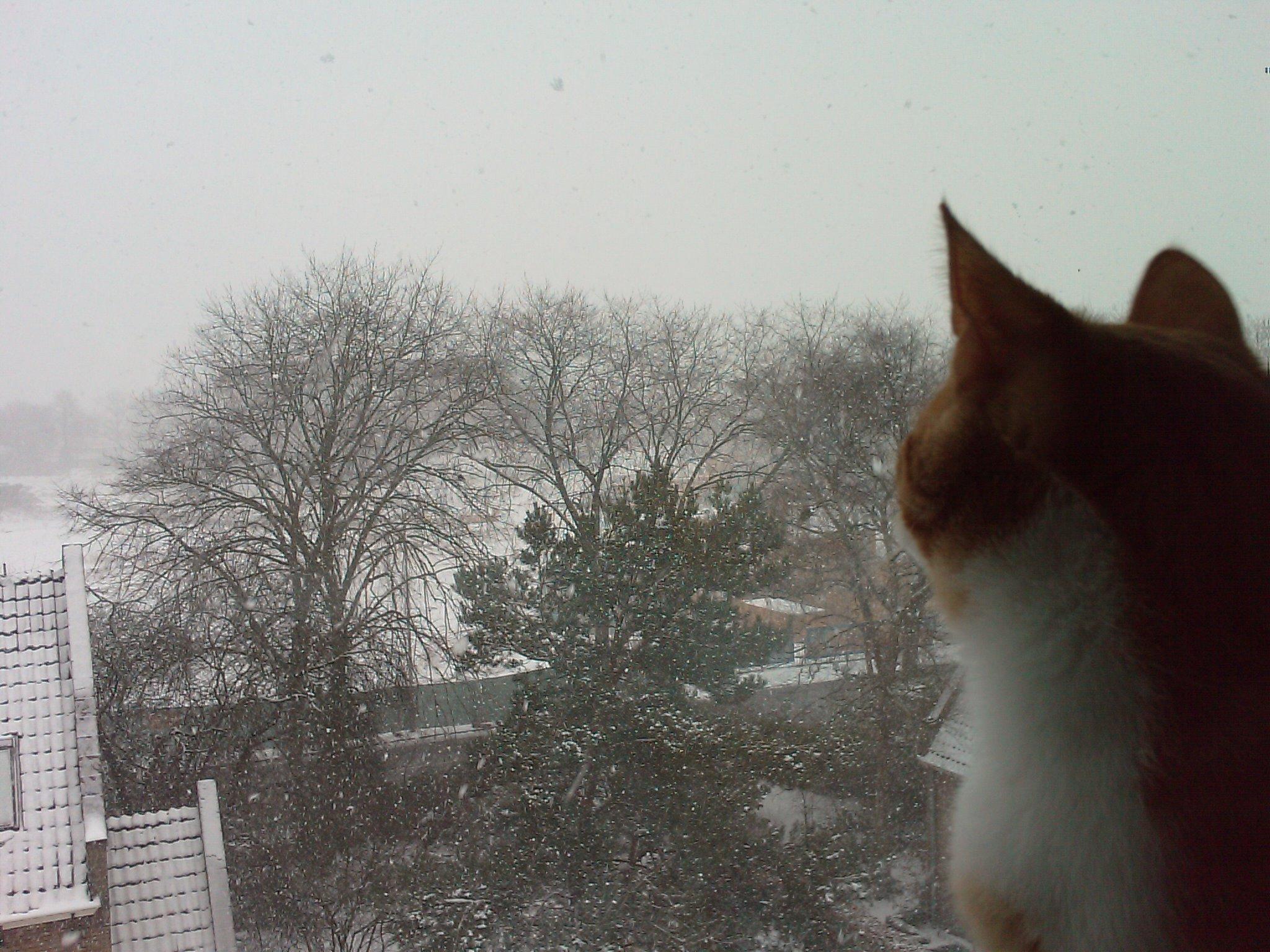 Sneeuw en Bliksem!