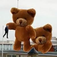 WTF! Een invasie van teddyberen!